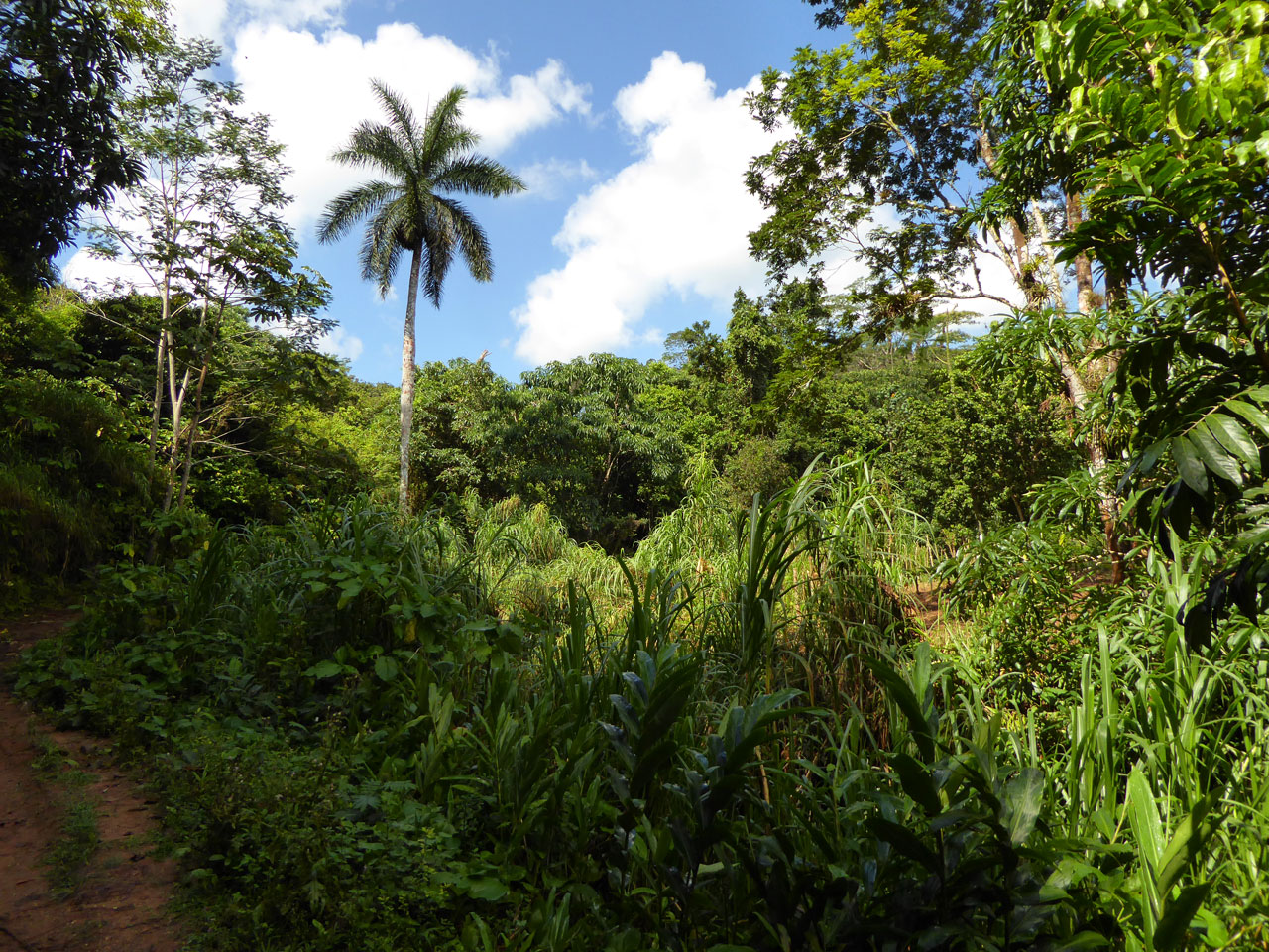 Jungle foliage in Topes de Collantes, Cuba