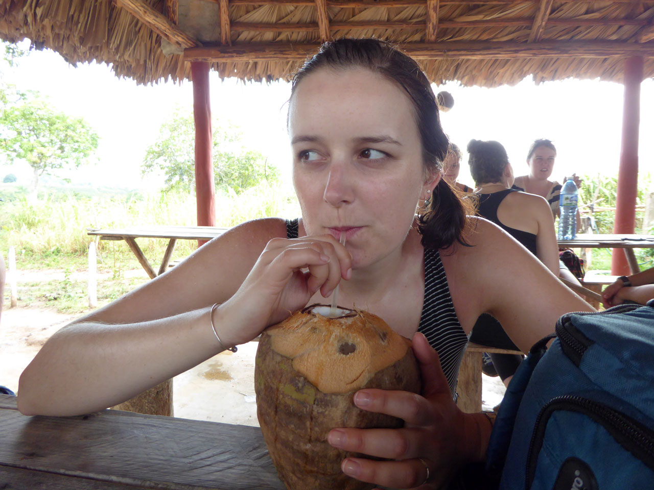Polly drinking from a coconut in Viñales