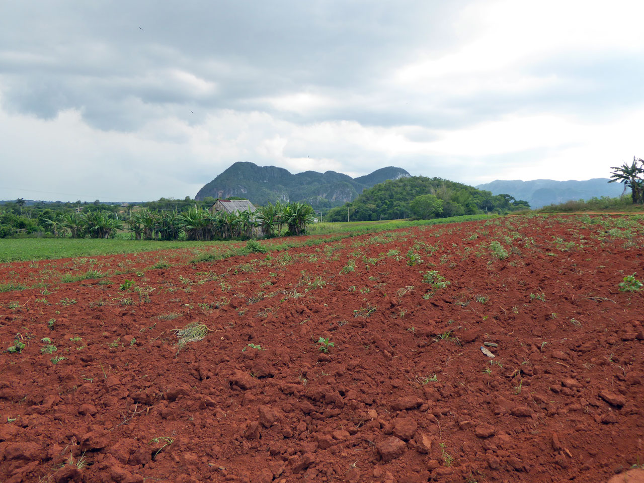 Red soil fields around Viñales, Cuba